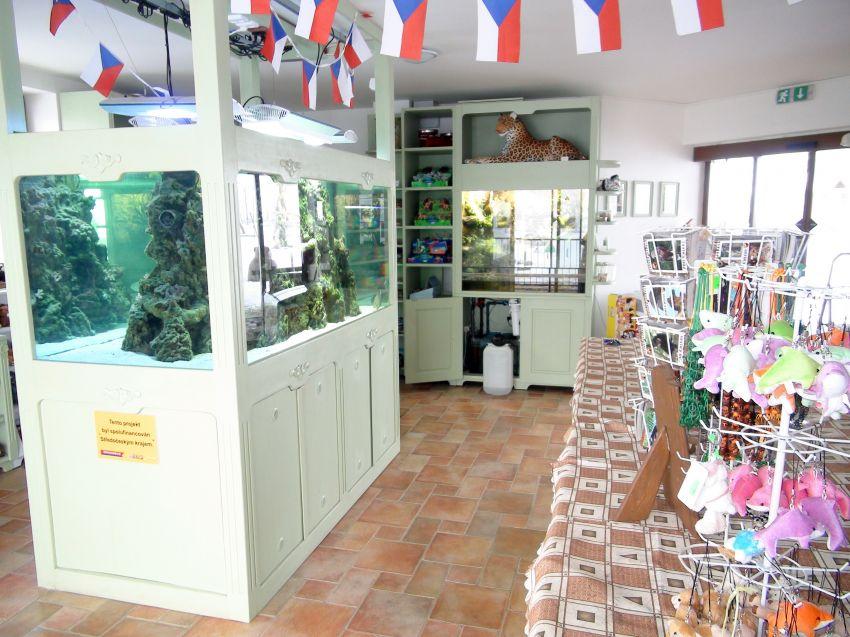 prostory obchodu se suvenýry s mořským akváriem uprostřed