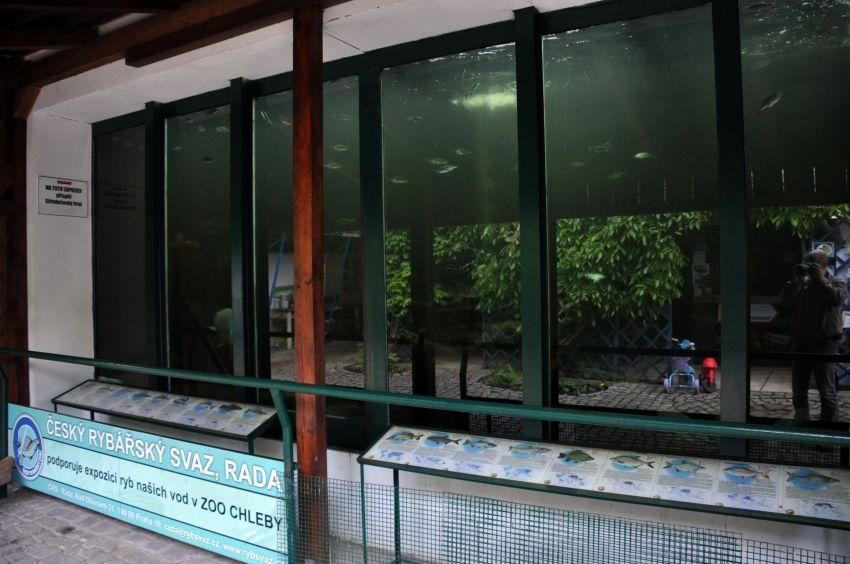 """pohled na ještě nezastíněné akvárium (s """"kinem"""", ale bez závěsu)"""