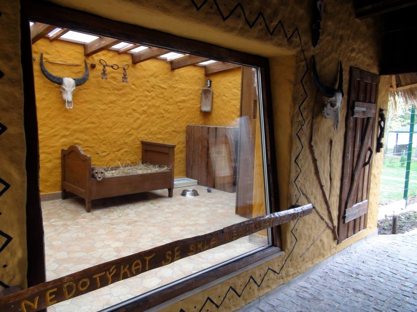 pohled oknem do vnitřní ubikace, kde v posteli leží gepardice