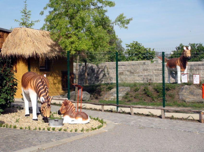 pohled na část výběhu se zebrami kvaga